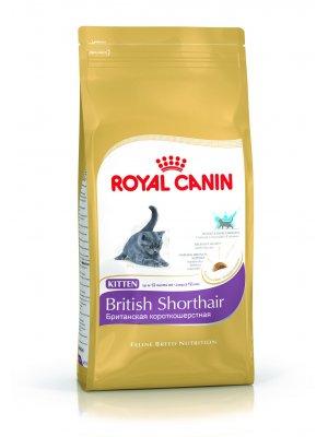 ROYAL CANIN British Shorthair Kitten 10kg karma sucha dla kociąt rasy brytyjski krótkowłosy