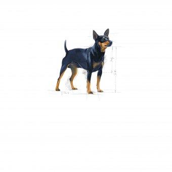 Royal Canin Mini Sensible 4kg