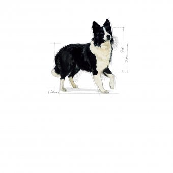 Royal Canin Medium Sensible 15kg