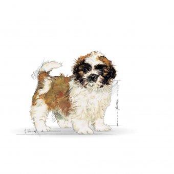 Royal Canin Shih Tzu Junior 0,5kg