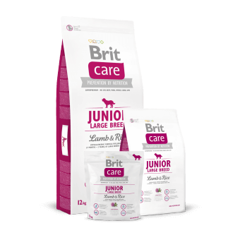 Brit Care Junior Large Breed Jagnięcina z Ryżem 1 kg