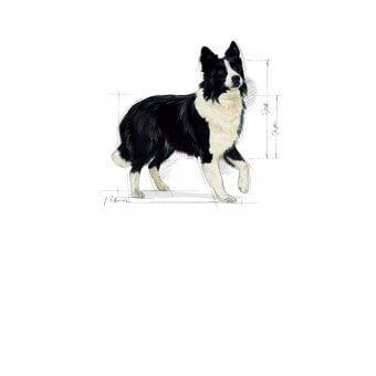 Royal Canin Medium Sensible 4kg