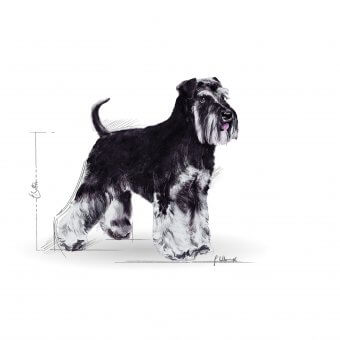 Royal Canin Miniature Schnauzer Adult 0,5kg