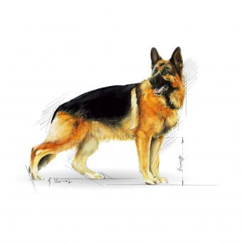 Royal Canin German Shepherd Adult 12kg