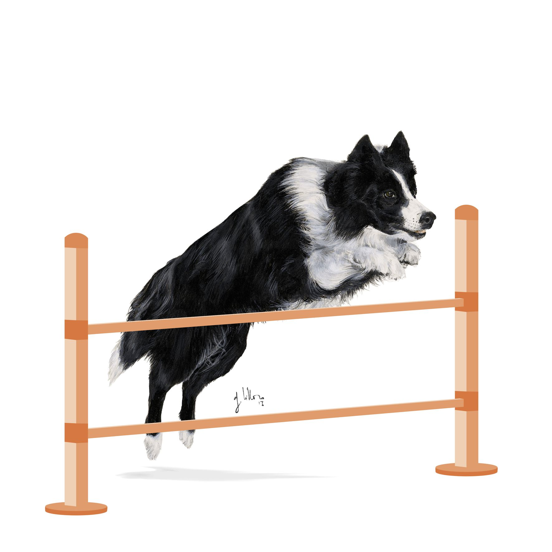 Royal Canin Agility 4100 Large 15kg