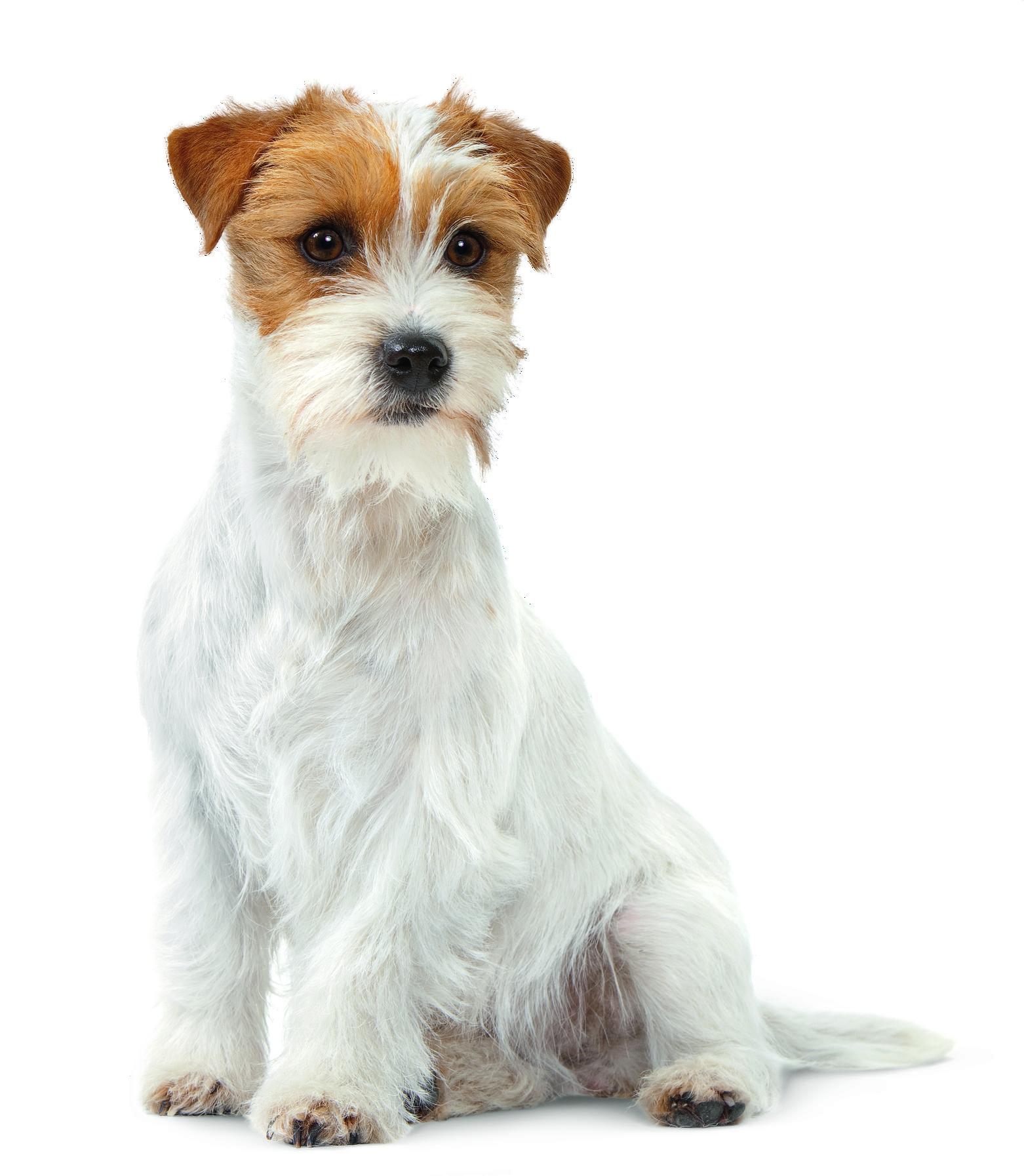 Royal Canin Adult Light 195g